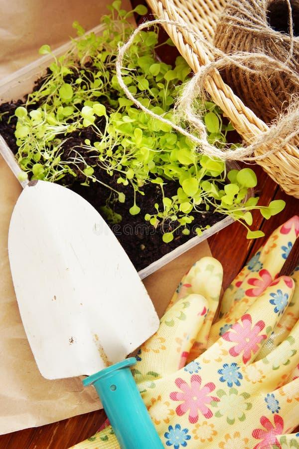 Arbeta i trädgården stilleben med plantor för transplantation och trädgårds- hjälpmedel arkivfoto