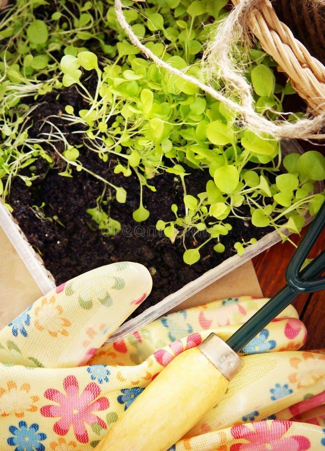 Arbeta i trädgården stilleben med trädgårds- hjälpmedel och plantor för transplantation royaltyfri bild
