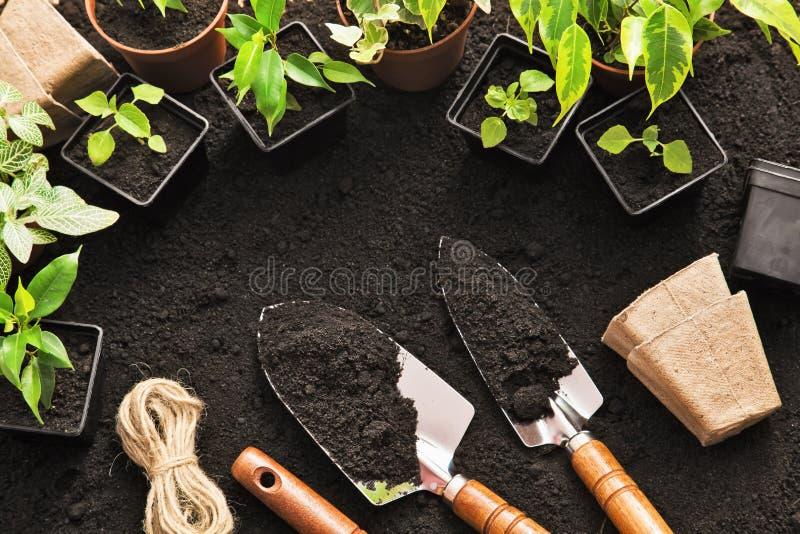 arbeta i trädgården växthjälpmedel royaltyfria foton