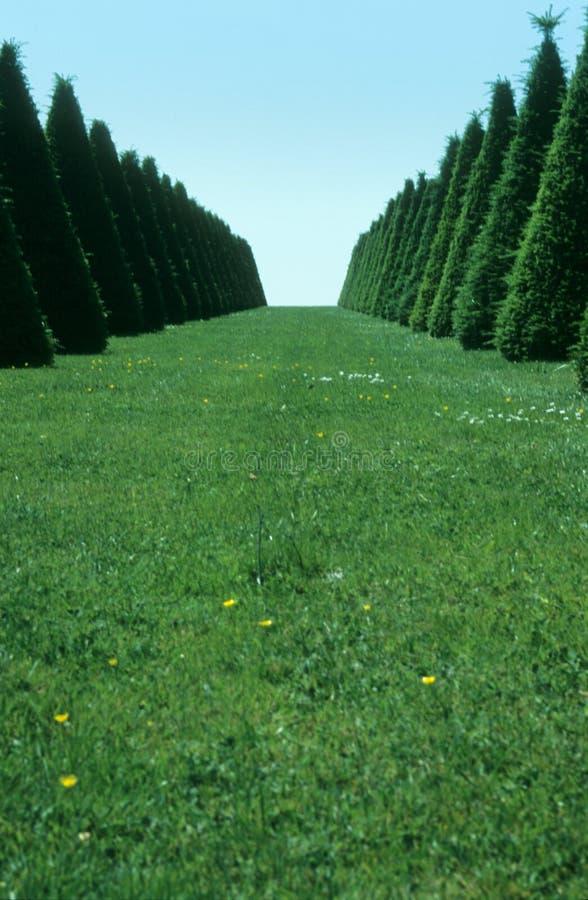 Download Arbeta I Trädgården Versailles Arkivfoto - Bild av staket, damm: 241392