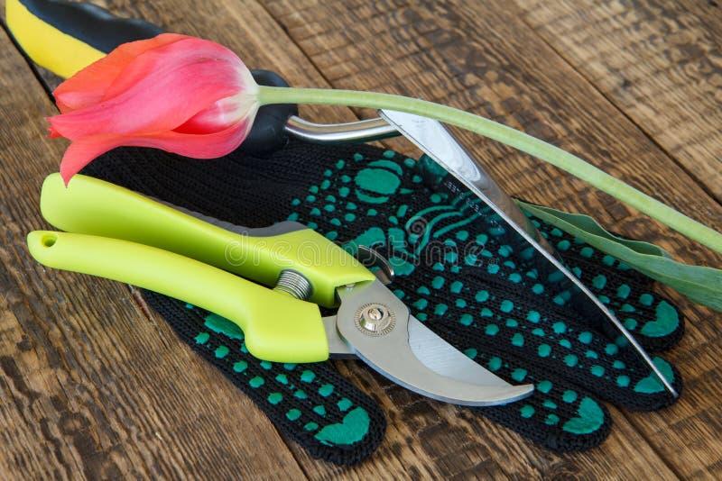 Arbeta i tr?dg?rden handsken, pruner, mursleven och snitttulpan p? tr?br?den fotografering för bildbyråer