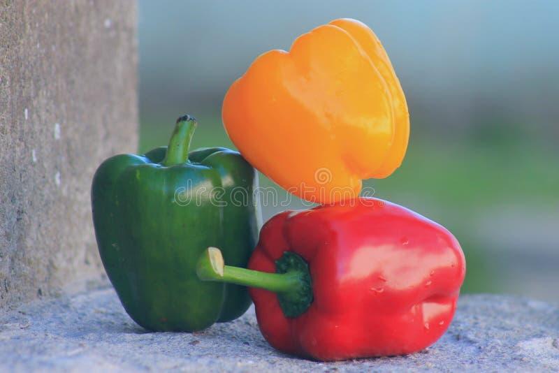 arbeta i tr?dg?rden mitt Spansk peppar rött, grönt och gult royaltyfria foton