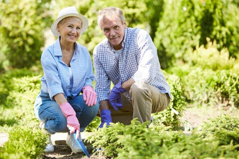 arbeta i tr?dg?rden pension?r f?r par tillsammans royaltyfri bild