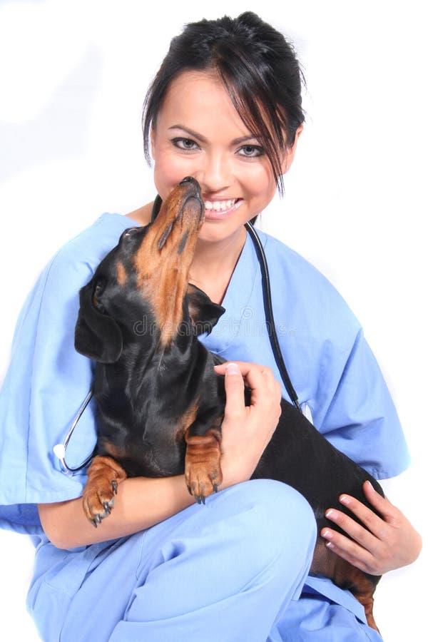 arbetare för hundkvinnligsjukvård royaltyfria bilder