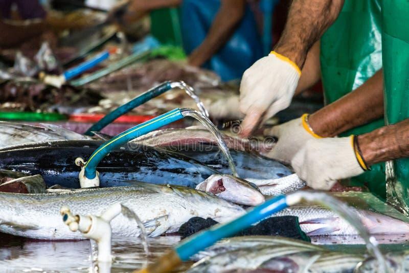 Arbetare i linjen som tvättar och klipper fisken på en tabell med vatten och vattenkranar på fiskmarknaden i mannen, Maldiverna arkivbilder