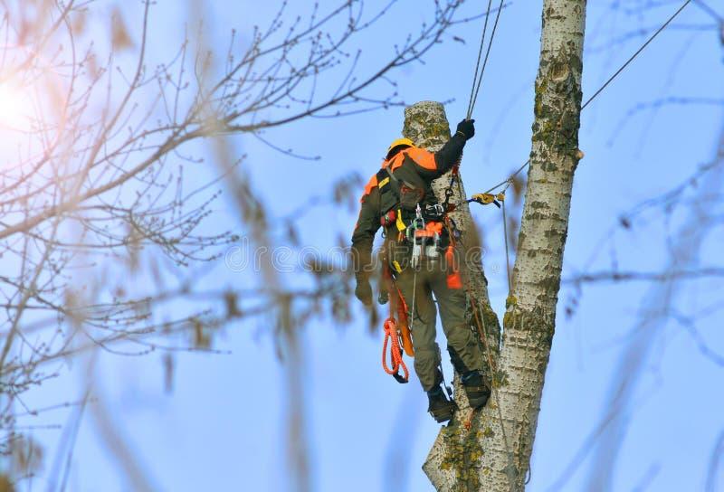Arbetare på arbete från det högväxta trädet som klipper service royaltyfri bild