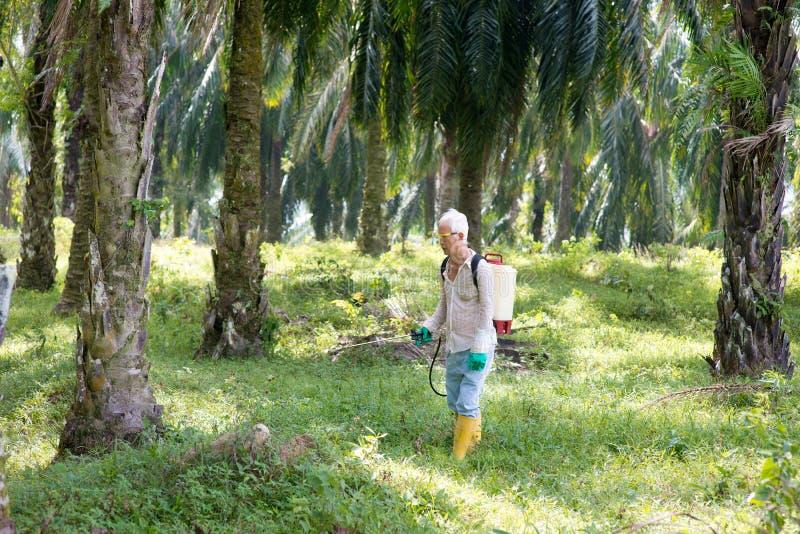 Arbetare som besprutar växtbekämpningsmedel royaltyfria bilder