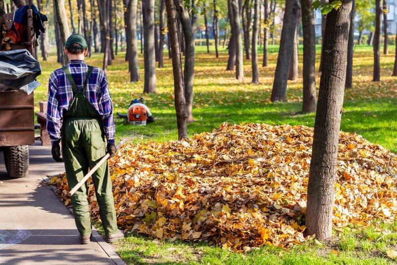 Arbetare som tar bort stupade sidor i höst i stadsparl säsongsbetonad lövverklokalvård i nedgång Ladda upp avskräde in i lastbile fotografering för bildbyråer