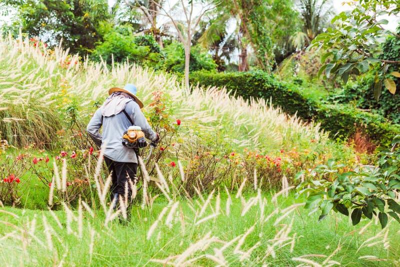 Arbetaren av en trädgård klipper av ett gräs Mannen i en likformig av den allmänna arbetaren arbetar på en gräsmatta arkivbild