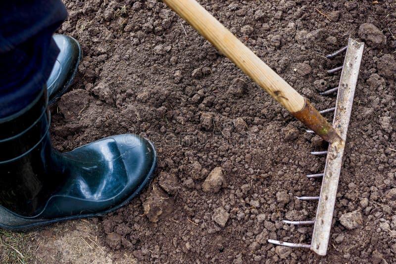 Arbetaren krattar den svarta jorden med krattar i grönsakträdgården royaltyfria foton