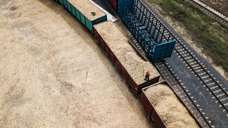 Arbetaren laddar sågspån i bilen på en snickerifabrik royaltyfria bilder