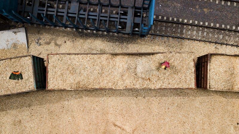 Arbetaren laddar sågspån i bilen på en snickerifabrik royaltyfria foton