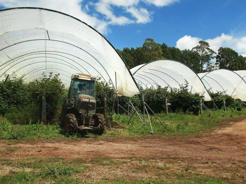 Arbetaren som använder en traktor för att bespruta hallonväxter på julkullar, brukar i Tasmanien royaltyfria foton