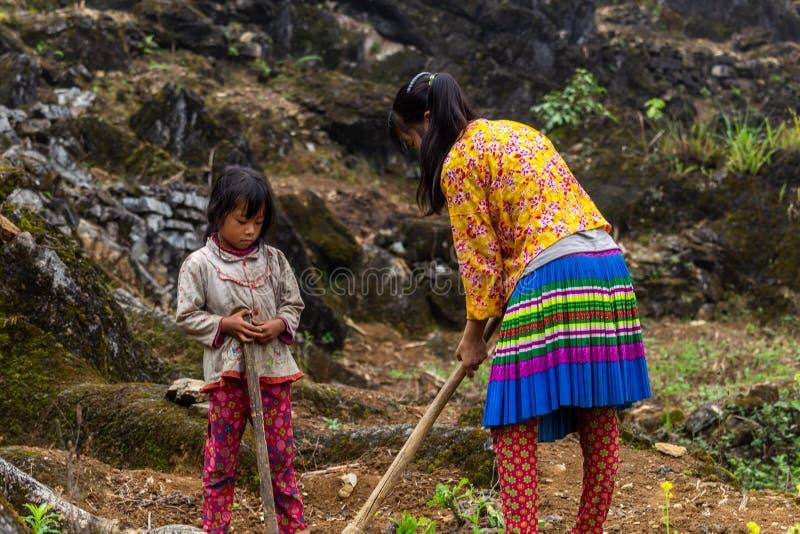 Arbete för barn Hmong för etnisk minoritet Vietnam arkivbilder