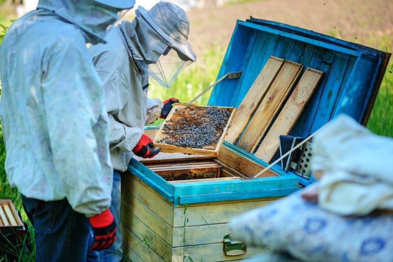 arbete två för sommar för apiarybeekeepersdag soligt Sommar royaltyfri fotografi