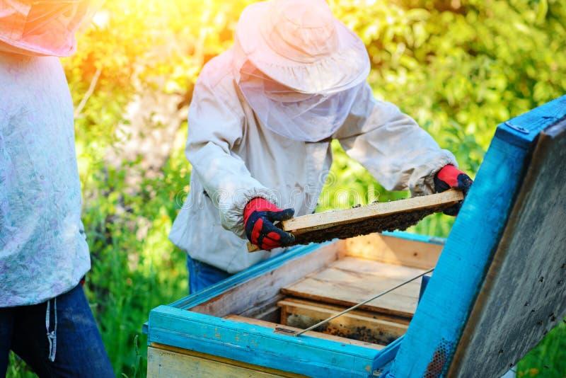 arbete två för sommar för apiarybeekeepersdag soligt Sommar arkivfoto