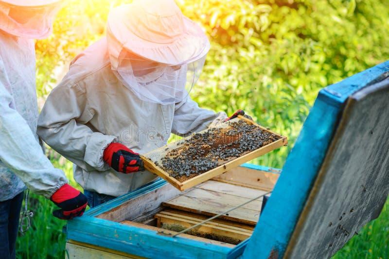 arbete två för sommar för apiarybeekeepersdag soligt Sommar royaltyfri foto