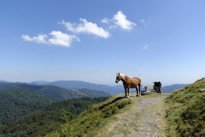 Arbetshäst och åsna i bergen arkivfoto