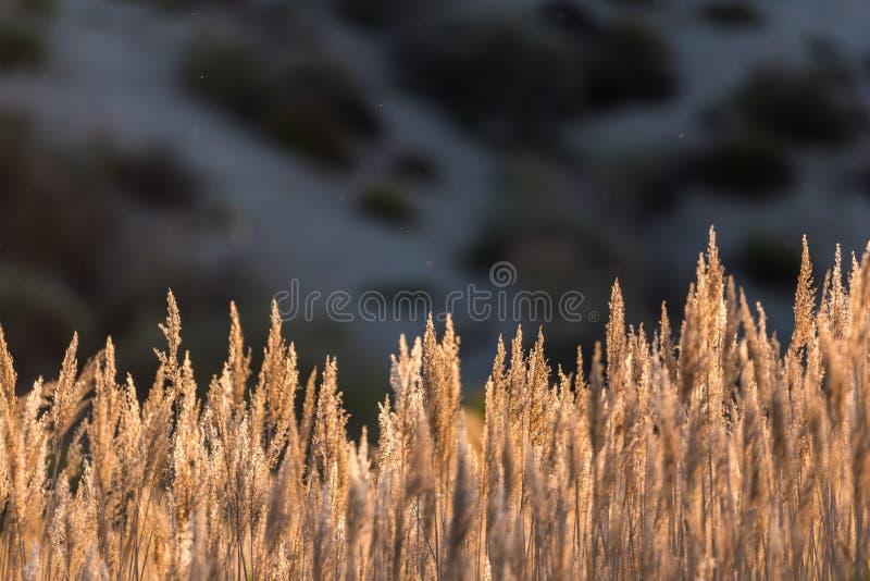 Arbetskopia och vegetation som är typiska av flodstranden och lagurna royaltyfri bild