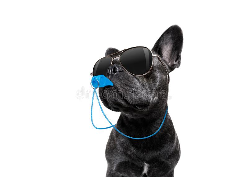 Arbitra pies z gwizd zdjęcie royalty free