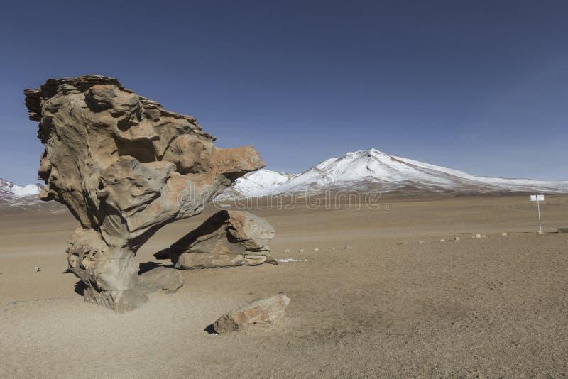 Arbol DE Piedra Stone de boom is een geïsoleerde rotsvorming in Th stock foto's
