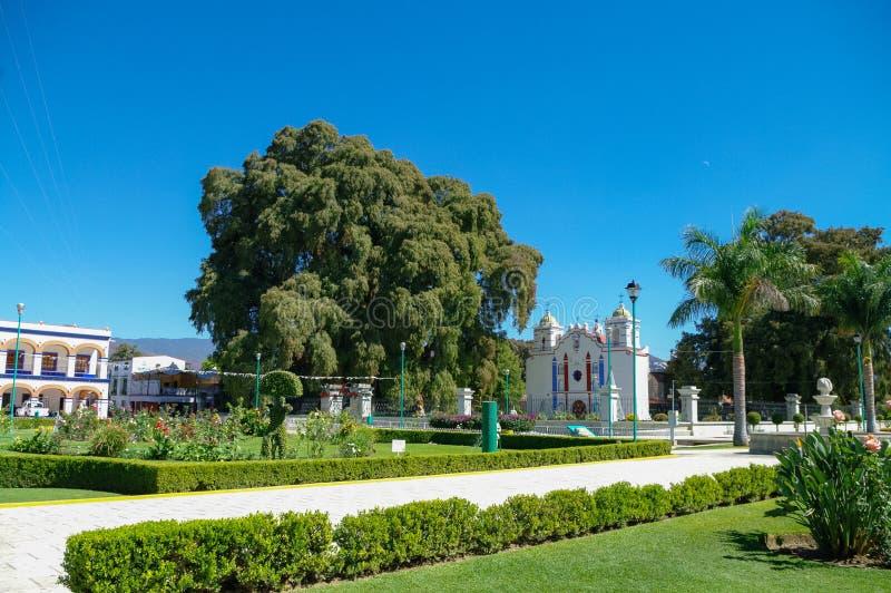 Arbol del Tule, een reuze heilige boom in Tule, Oaxaca stock afbeelding
