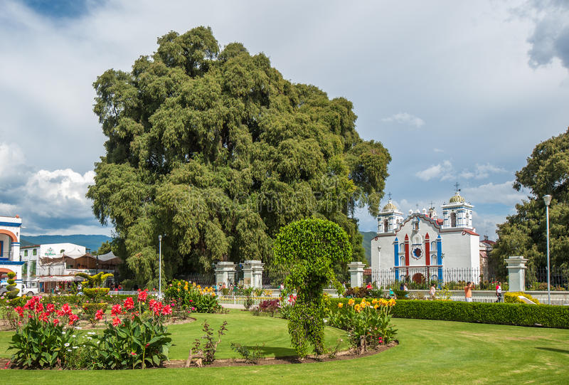 Arbol del Tule, ett jätte- sakralt träd i Tule, Oaxaca, Mexico royaltyfri foto