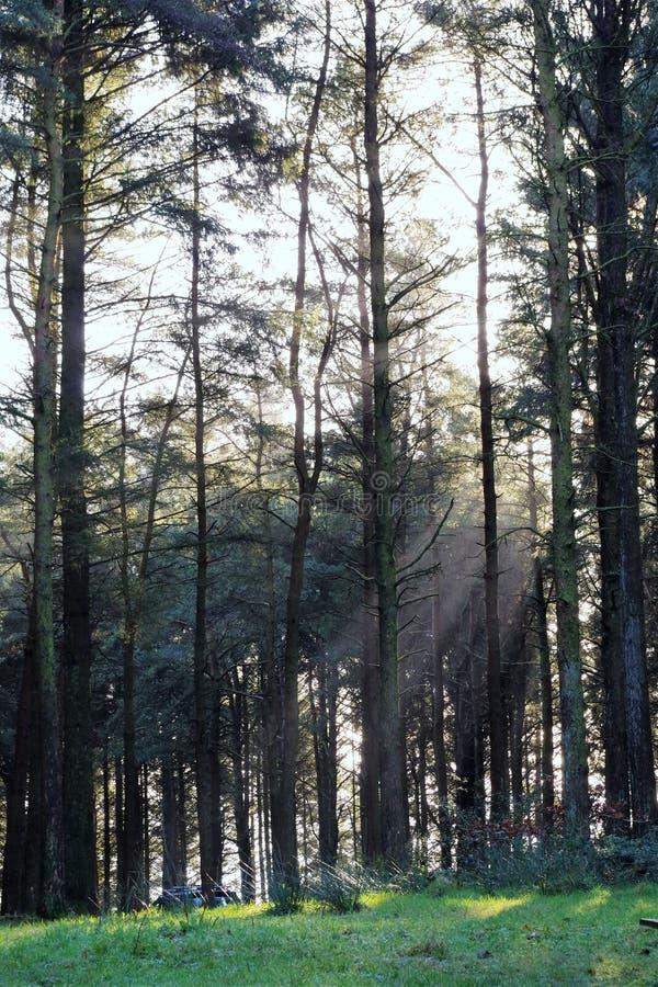 Arbolado del invierno foto de archivo libre de regalías