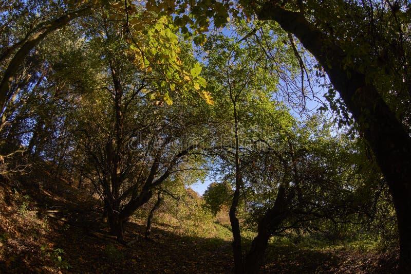 Arbolado del otoño/de la caída fotos de archivo libres de regalías