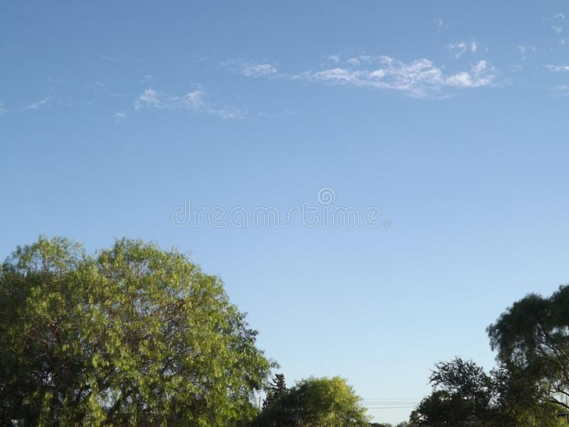 Arboleda con el cielo azul imagenes de archivo
