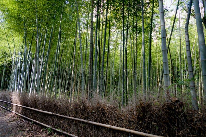 Arboleda de bambú famosa en Arashiyama, Kyoto imagenes de archivo