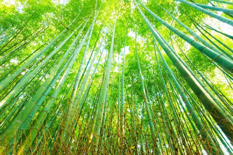 Arboleda de bambú Forest Radial Looking Up de Arashiyama fotografía de archivo