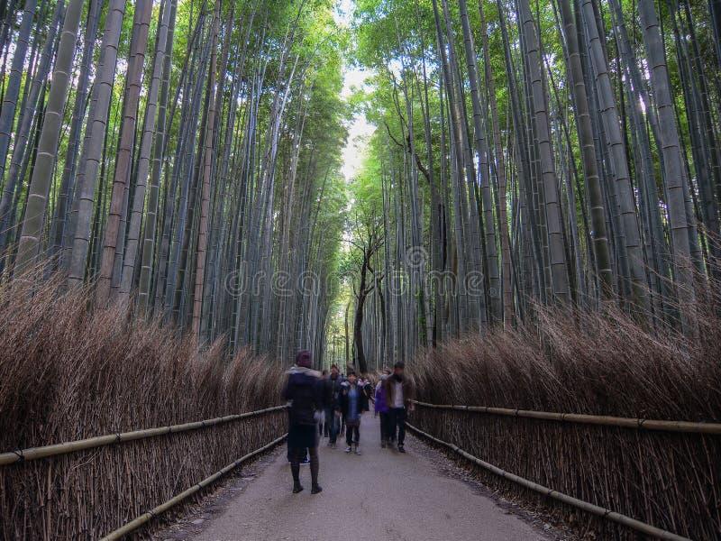 Arboleda de bamb? hermosa foto de archivo libre de regalías