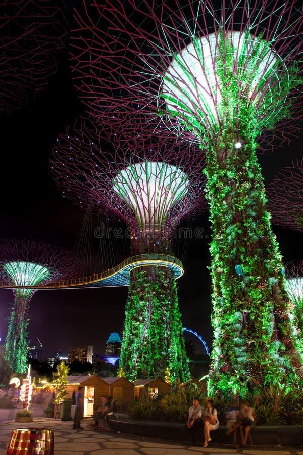 Arboleda de Supertree en los jardines por la bahía en Singapur foto de archivo