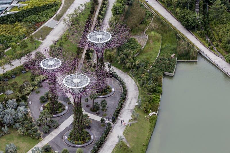 Arboleda de Supertree en los jardines por la bahía en Singapur imagenes de archivo