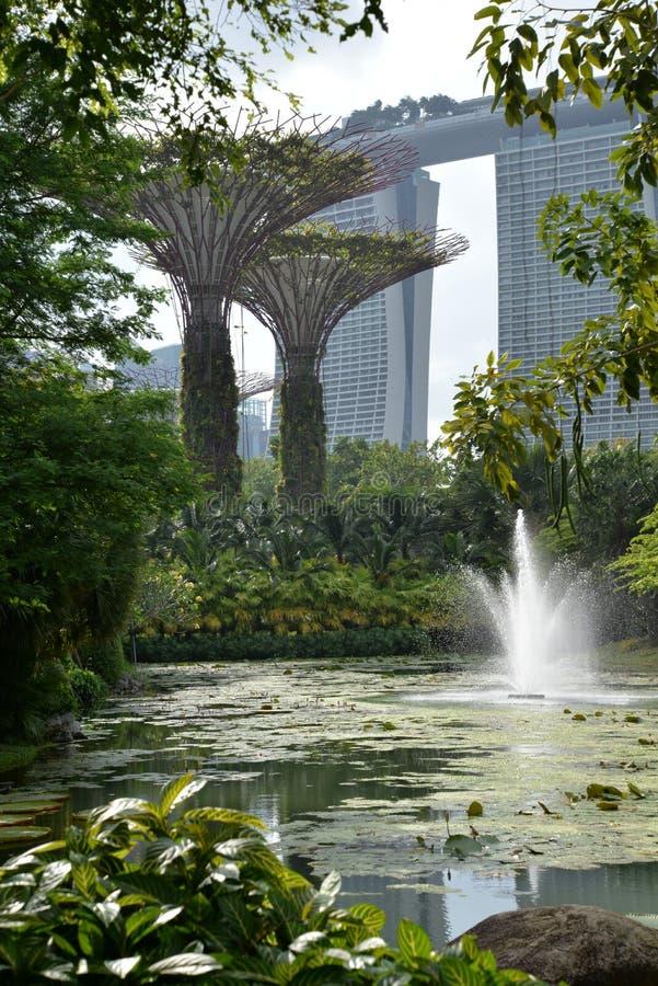 Arboleda de Supertree, jardines por la bahía, Singapur foto de archivo