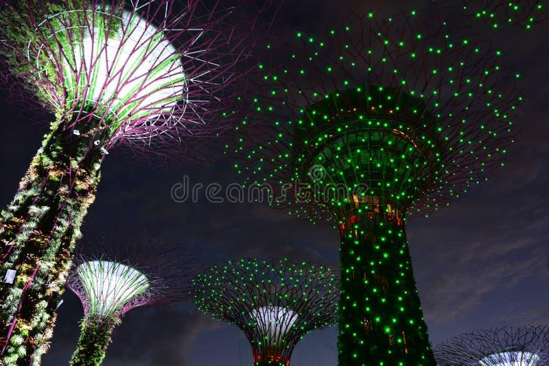 Arboleda de Supertrees en los jardines por la bahía, en Singapur imagenes de archivo