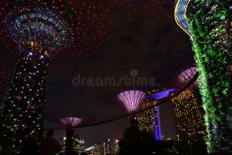 Arboleda de Supertrees en los jardines por la bahía, en Singapur fotos de archivo