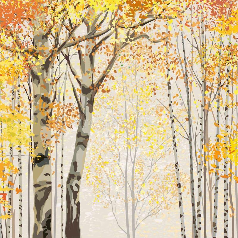 Arboleda del abedul en tiempo del otoño ilustración del vector