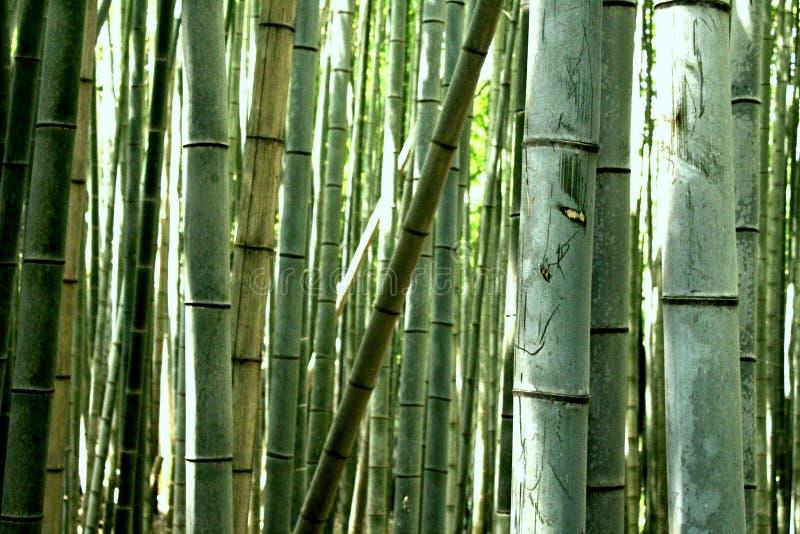 Arboleda del bambú de Sagono Arashiyama fotos de archivo libres de regalías