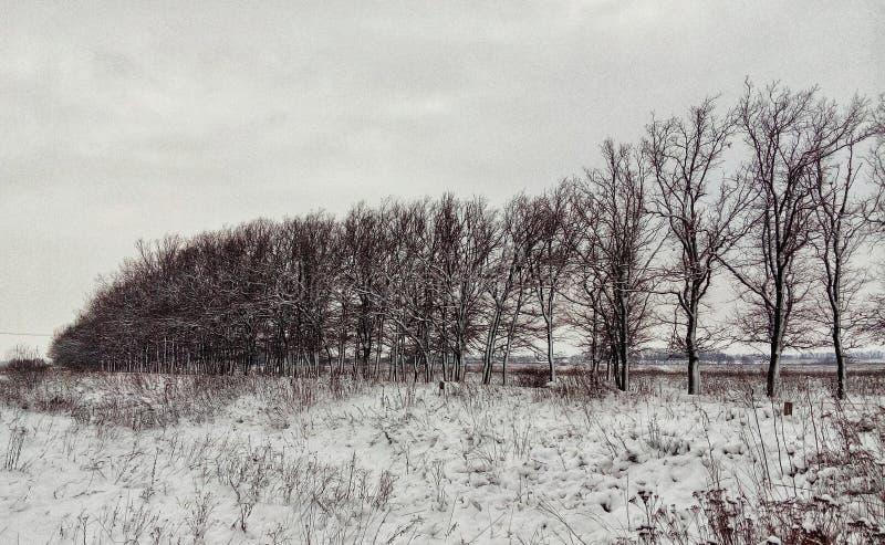 Arboleda del invierno en el campo foto de archivo libre de regalías