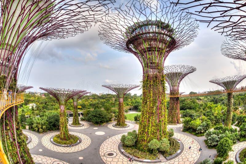 Arboleda icónica de Supertree en los jardines por la bahía foto de archivo