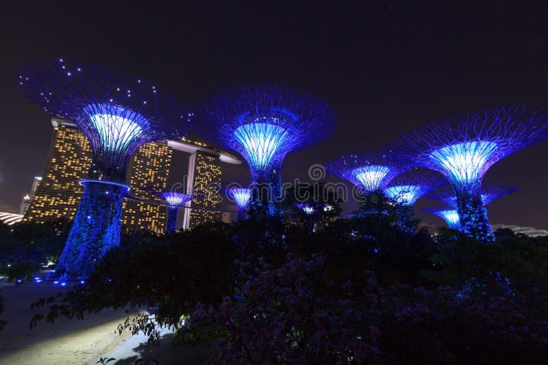 Arboleda y Marina Bay Sands de Supertree en la noche en jardines por la bahía fotos de archivo