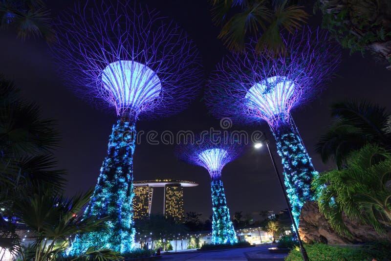 Arboleda y Marina Bay Sands de Supertree en la noche en jardines por la bahía foto de archivo libre de regalías