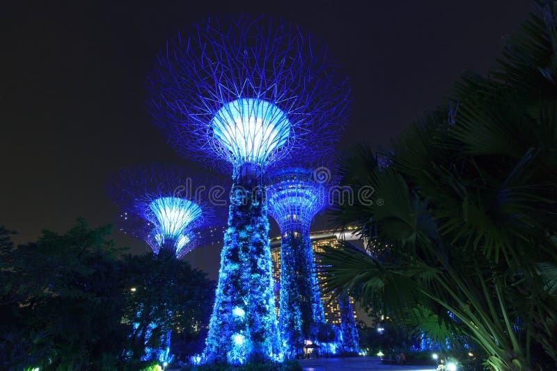 Arboleda y Marina Bay Sands de Supertree en la noche en jardines por la bahía fotos de archivo libres de regalías