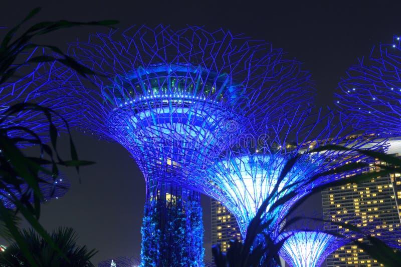 Arboleda y Marina Bay Sands de Supertree en la noche en jardines por la bahía imagen de archivo