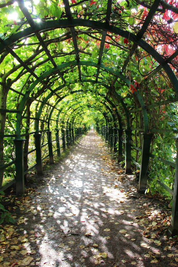 Arbor with grapes stock photos
