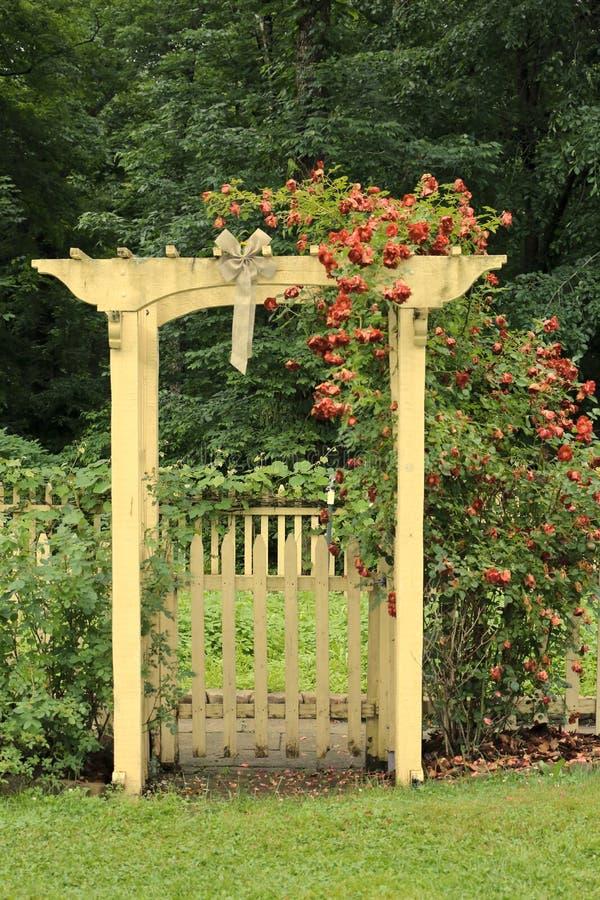 Arbor roses yard stock photo