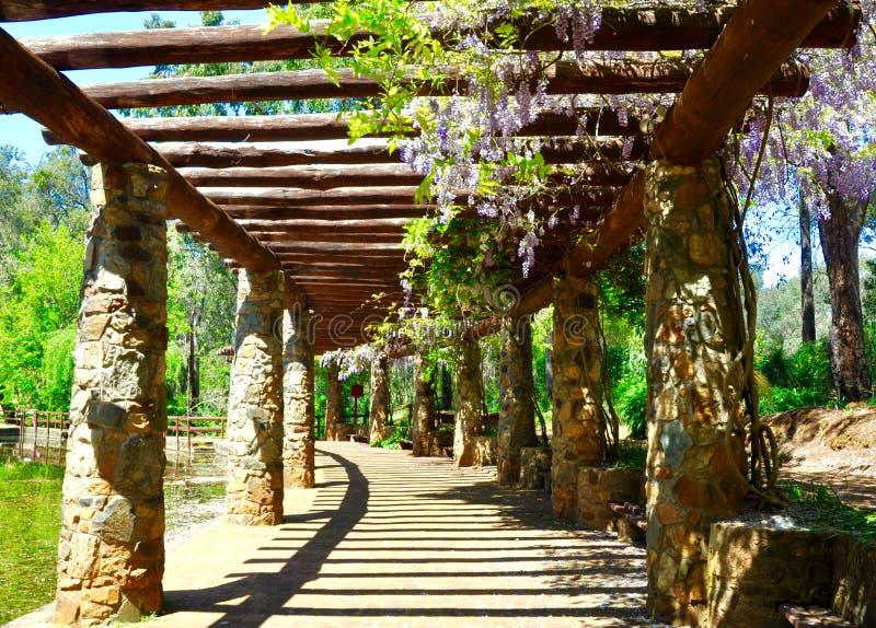 Arbor with Stunning Purple Wisteria: Araluen Botanic Park, Western Australia. Perspective view of a stone arbor with hanging purple wisteria, pond water and stock photo