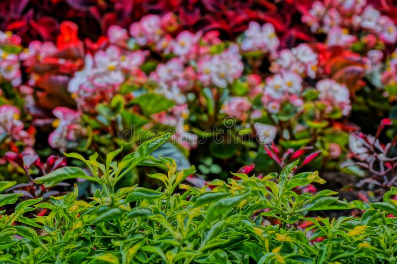 arboreta Ekaterinburg 2018 august miejsce mieć odpoczynek obrazy royalty free